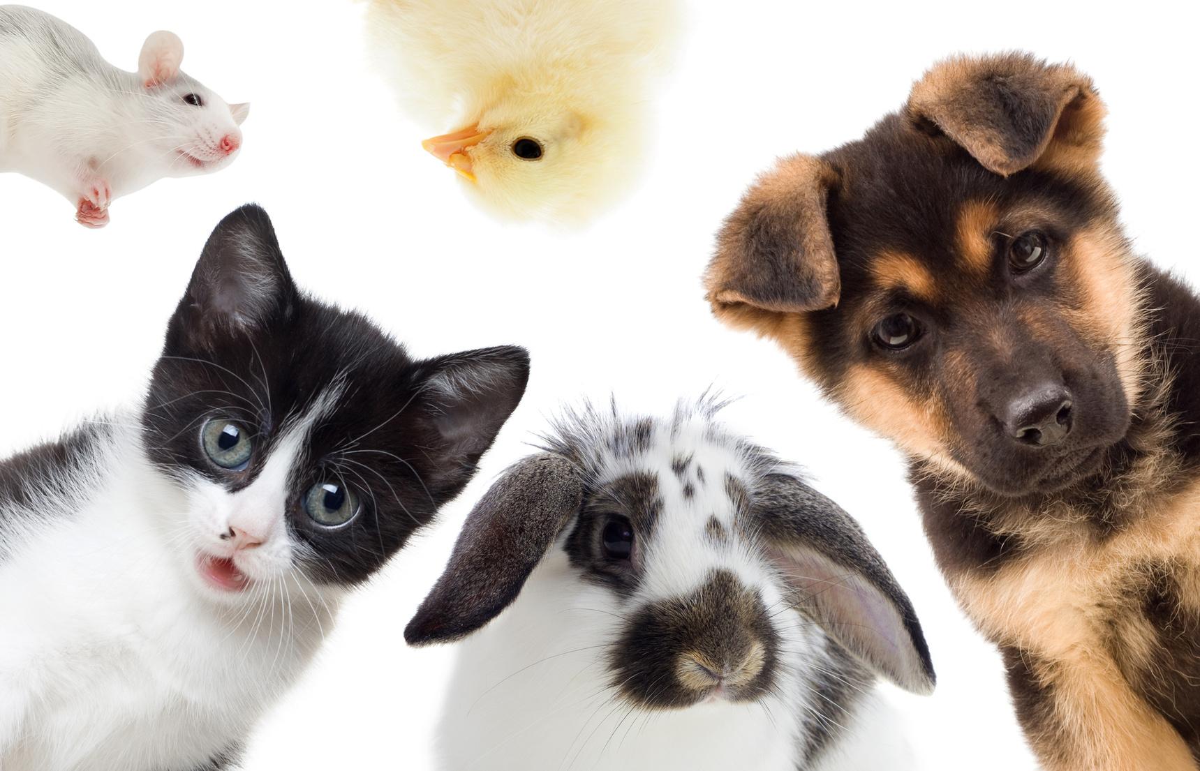 Partons ensemble à la rencontre des animaux de compagnie ainsi que ceux de la ferme